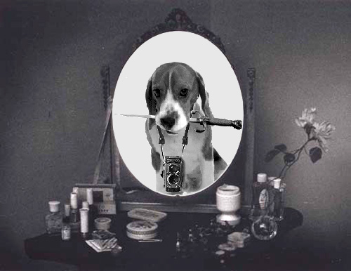 2013_36_Beagle-Mirror-Gestalt