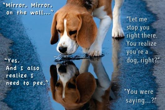 2013_47_MirrorMirror_Beagle