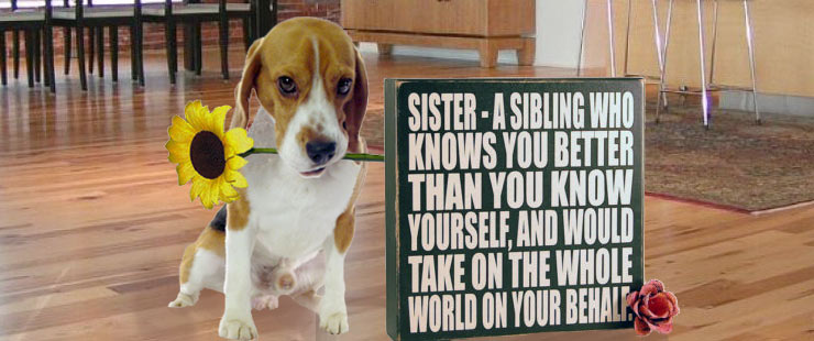 2014_69_Sister_Beagle4